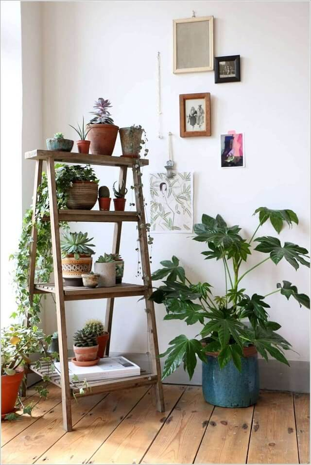 Plants resting in pots on a wooden ladder