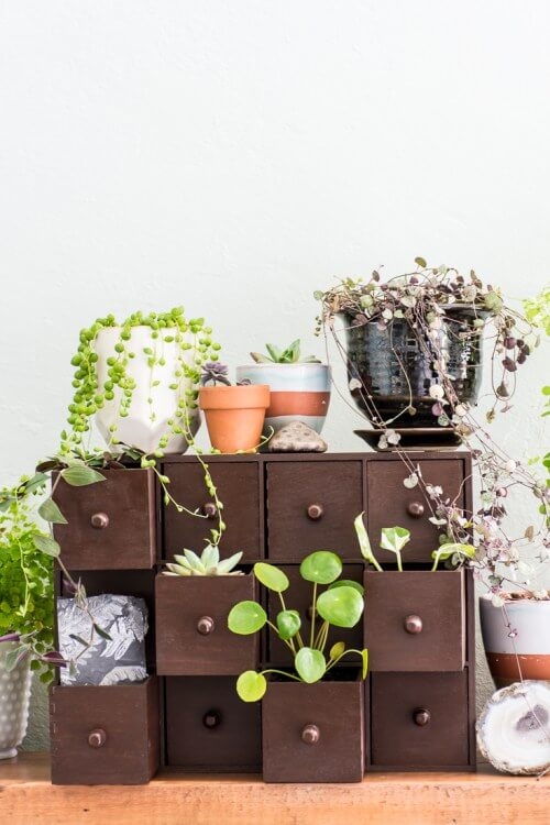 Plants in drawers