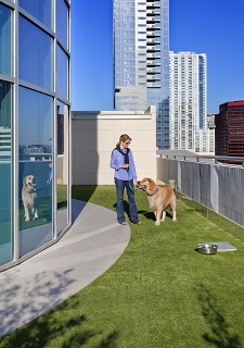 Pet Amenities_High Rise Dog Park_Austonian